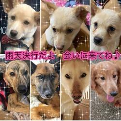 川越保護犬猫譲渡会★子猫、成猫、雑種犬、柴など