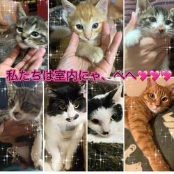 川越保護犬猫譲渡会★子猫、成猫、雑種犬、柴など サムネイル2