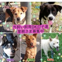 川越保護犬猫譲渡会★子猫、成猫、雑種犬、柴など サムネイル3