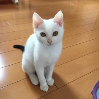 控え目な白黒猫の「モコ」