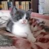 ハチワレ猫の4兄妹。