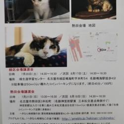 名古屋市熱田区の猫の 譲渡会