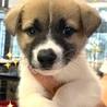 個体番号:M395 元気な子犬です。