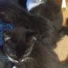 子猫5匹の里親さん募集中です サムネイル2