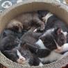 子猫5匹の里親さん募集中です サムネイル4