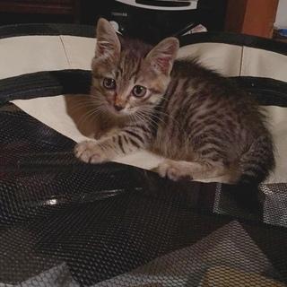 生後3ヶ月の可愛い女の子です!
