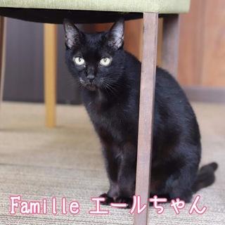 黒猫 エールちゃん 里親募集中!