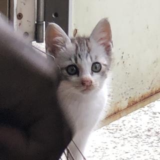 ★可愛い人馴れしている仔猫です★