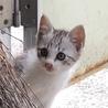★可愛い人馴れしている仔猫です★ サムネイル2