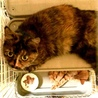 緊急!飼い主さんが入院、残された猫達 サムネイル2