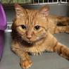 緊急!飼い主さんが入院、残された猫達 サムネイル3