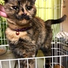 緊急!飼い主さんが入院、残された猫達 サムネイル4