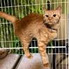 緊急!飼い主さんが入院、残された猫達 サムネイル5