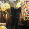 珍しい霜降り黒猫 サムネイル6