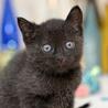 珍しい霜降り黒猫 サムネイル7