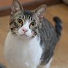 きれいなハチワレ猫 サムネイル2