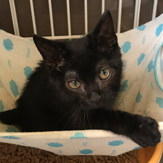 セミロングの黒猫くん