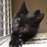 セミロングの黒猫くん サムネイル2