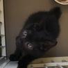 セミロングの黒猫くん サムネイル3