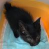 セミロングの黒猫くん サムネイル5