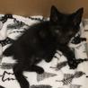セミロングの黒猫くん サムネイル6