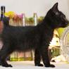 セミロングの黒猫くん サムネイル7