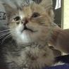 捨て猫の子猫ちゃん保護しました!  サムネイル3