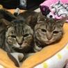 プーちゃん家の猫達と地域猫