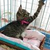 ルナ    3ヶ月くらいの女の子 サムネイル2
