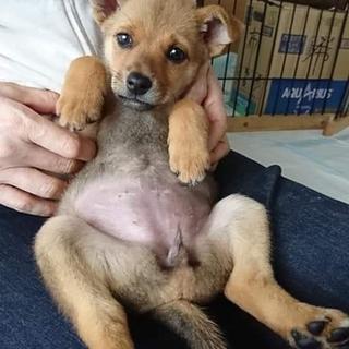 生後2ヶ月子犬3頭飼い主募集中