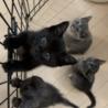 真っ黒の可愛い子ネコ サムネイル2