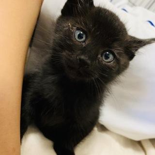 真っ黒の可愛い子ネコ