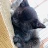 真っ黒の可愛い子ネコ サムネイル4