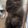 可愛い子ネコ サムネイル3