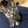 可愛い子ネコ