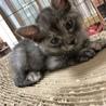 可愛い子ネコ サムネイル2