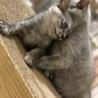 可愛い子ネコ サムネイル4