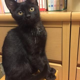 イケニャン黒猫男子★ちびクロ