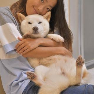 まるでぬいぐるみ 愛嬌溢れる柴犬ミックス