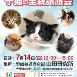 【野崎参道商店街】臨時子ネコ里親会