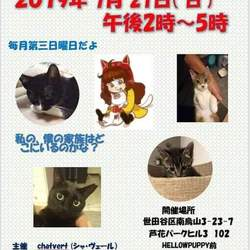 猫の里親会@芦花公園