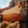 人が大好き甘えん坊の三毛猫のミミちゃんです! サムネイル4