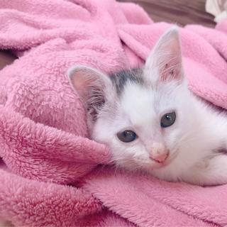 生後1ヶ月。人懐っこい子猫の女の子♪