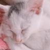 生後1ヶ月。人懐っこい子猫の女の子♪ サムネイル4