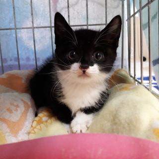 可愛い黒白子猫♀️みぃみぃちゃん