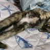 変わった柄のサビ猫ティムちゃん(///ω///)♪ サムネイル2