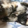 変わった柄のサビ猫ティムちゃん(///ω///)♪ サムネイル3