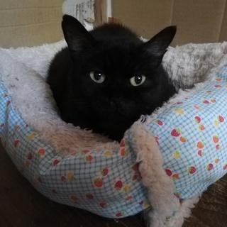 猫との生活が初めての方にもおすすめニャンコです☆彡