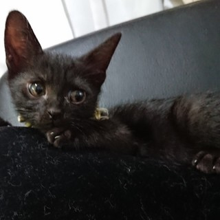 5月生まれ元気な黒猫の男の子