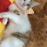 究極の甘えん坊!可愛いポンちゃんに救いの手を♡ サムネイル3
